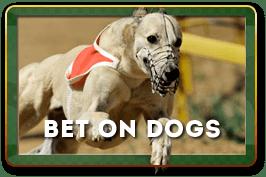 Ставки на собачьи бега 3Д