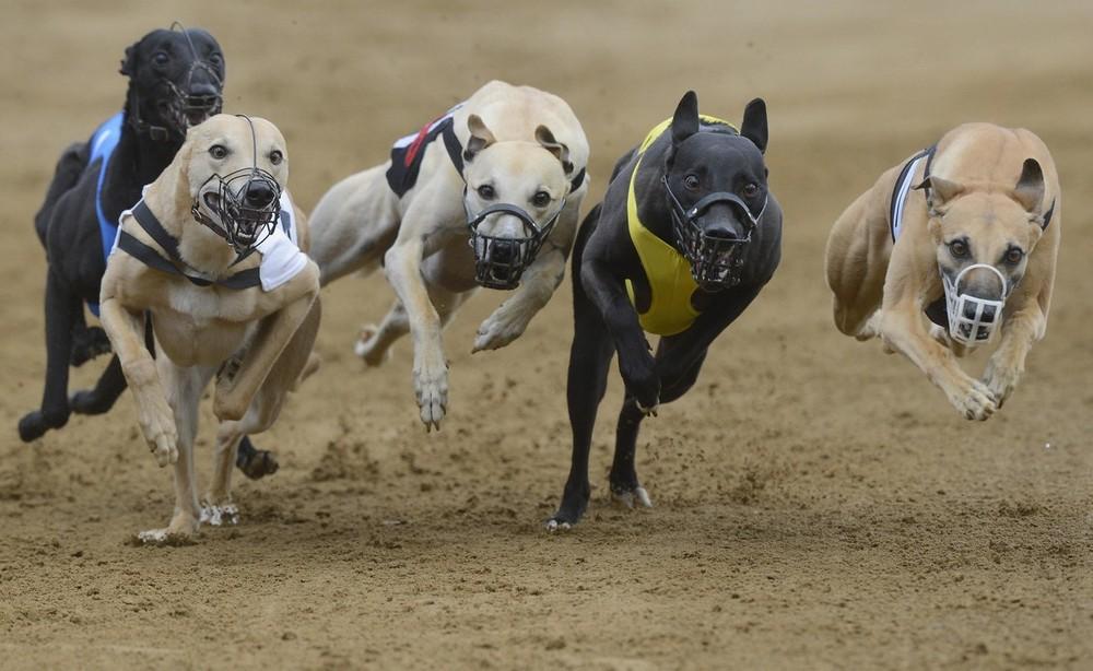 Собачьи-бега